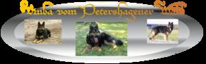 Deutscher Schäferhund schw/braun
