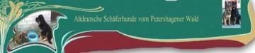 altdeutsche Schäferhunde mit geradem Rücken